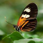 butterfly avatar
